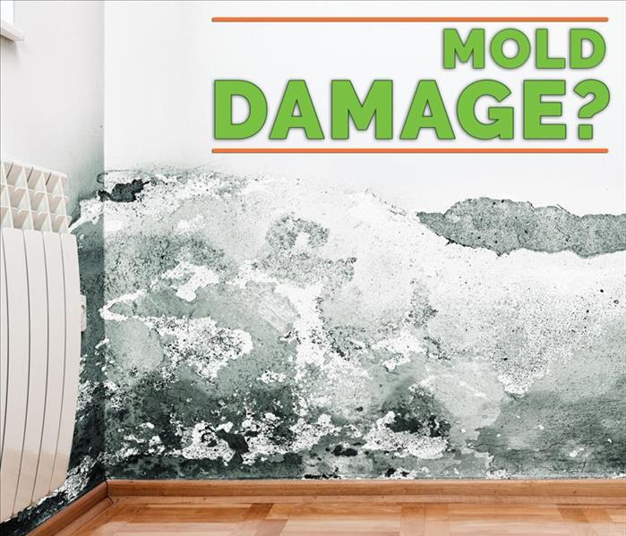Mold growth on the wall of a living room