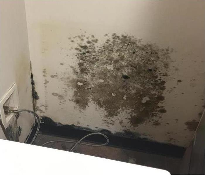 Mold In Apartment: SERVPRO Of Mount Prospect / North Des Plaines Gallery Photos