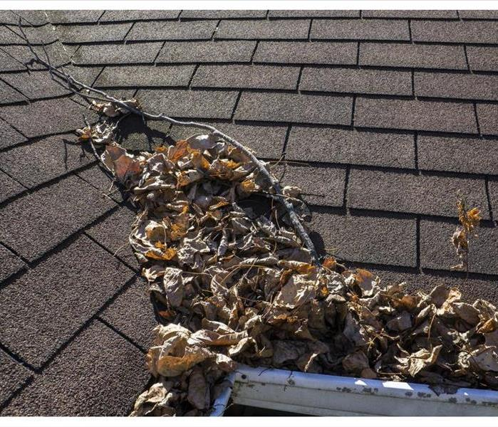 Leaves and sticks piling up in a valley of a roof.