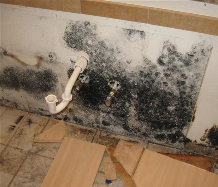 Mold Remediation So You Think You Might Have Mold?