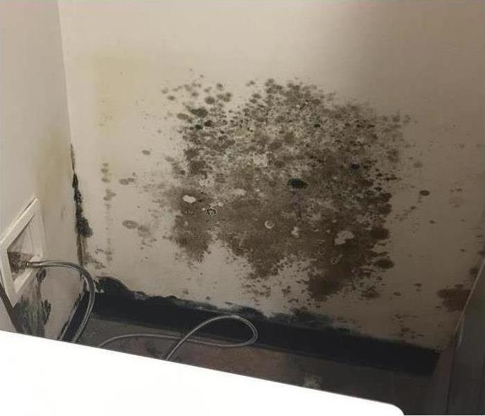 Mold growth on a wall