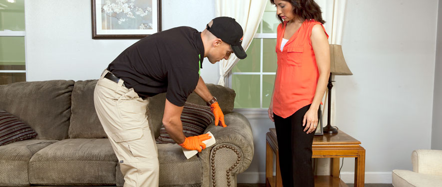 Mount Prospect, IL carpet upholstery cleaning